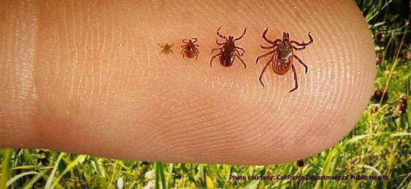 How To Rid Your Dogs Of Fleas And Ticks 100 Australian