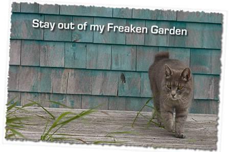 Diy Cat Deterrent With Eucalyptus Oil Emu Ridge