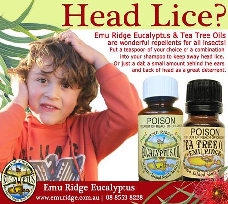 emu ridge 100% essential oils - eucalyptus and tea tree for, Skeleton