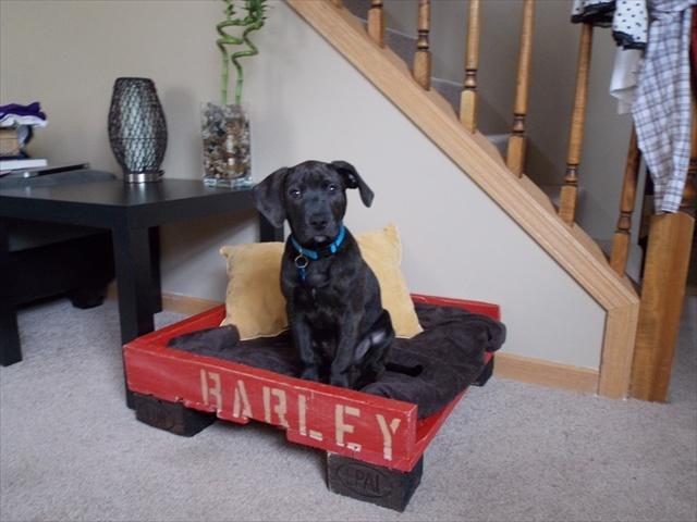 pallet-dog-bed-2