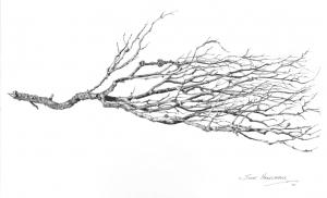 Dry Branch_Scott Hartshorne