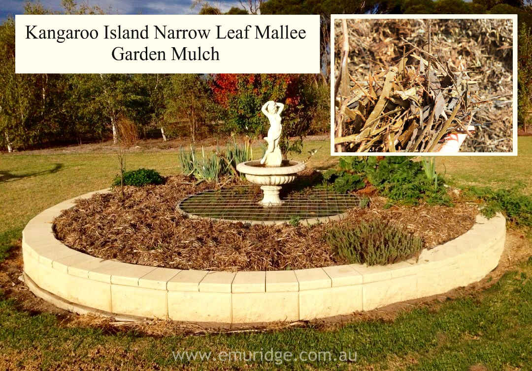 Kangaroo Island Narrow Leaf Mallee Mulch FOR SALE for your Garden ...