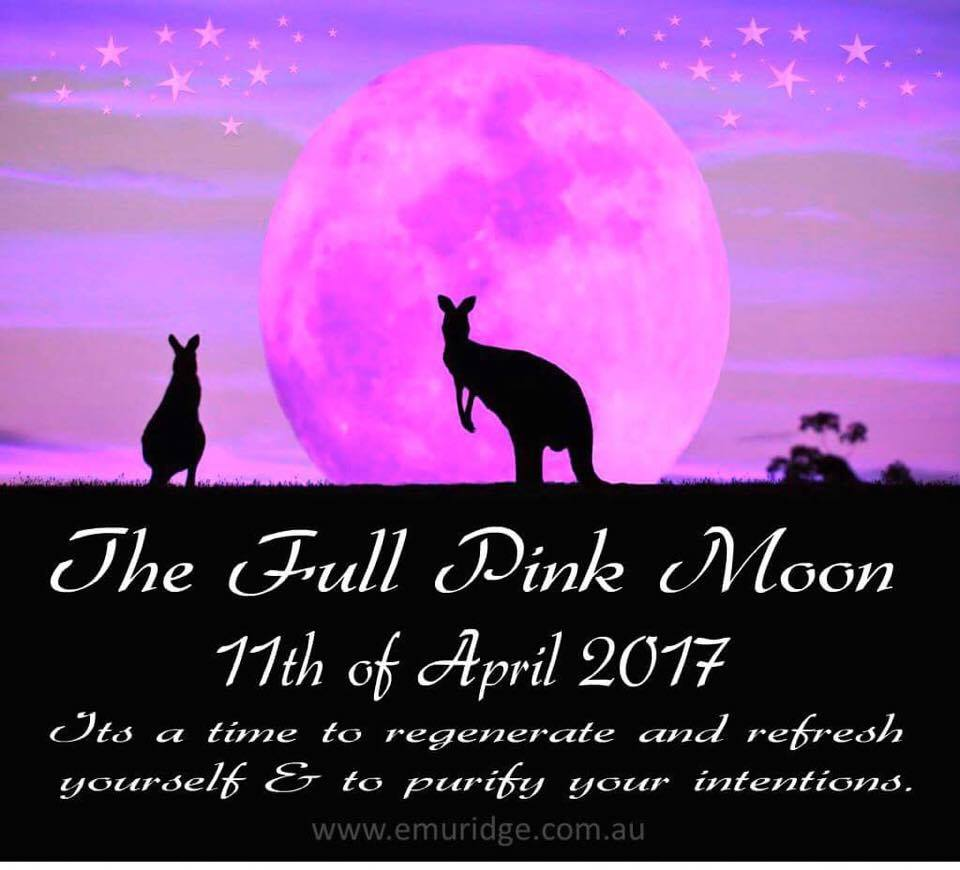 Pink Moon Full Moon And Feral Plant Species Kangaroo