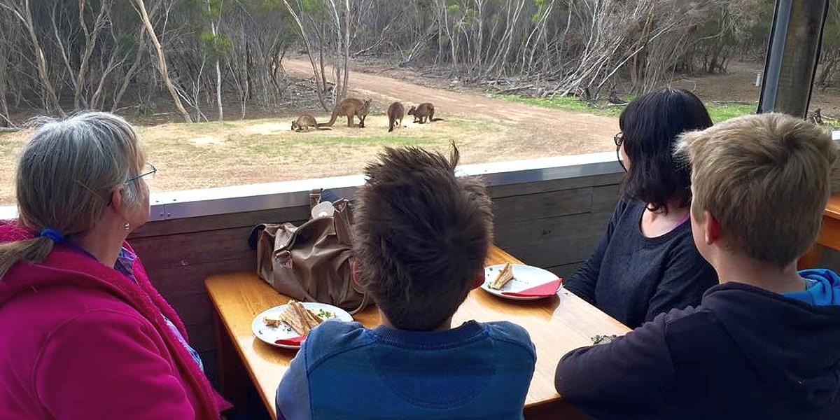 cafe-family-kangaroos